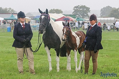 Wednesday 14th August: Gillingham and Shaftesbury Show