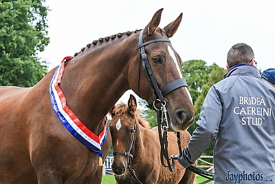 Saturday 28th September : Sports Horse Breeding Show at Bicton
